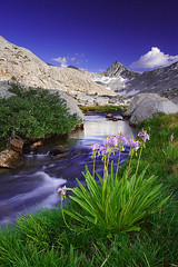 Seven Gables Basin (copeg) Tags: california nature forest john landscape high greg nevada meadow basin sierra national backpacking seven wilderness gables sierranevada muir cope highsierra shootingstar johnmuirwilderness interestingness28 sierravisions