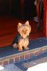 Really Cute Dog! (S.D.) Tags: dog cute nikon walk 2006 walkabout gothamist vr dx 18200mm september2006 d80 nikonstunninggallery nikond80 impressedbeauty