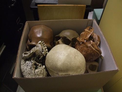 Ancestor box