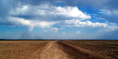 Cadillac Ranch -  A Wider View - by Whatknot