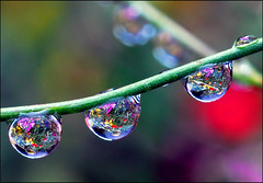 little drop gardens (Steve took it) Tags: macro nature ilovenature drops quality waterdrops gtaggroup goddaym1 kkfav