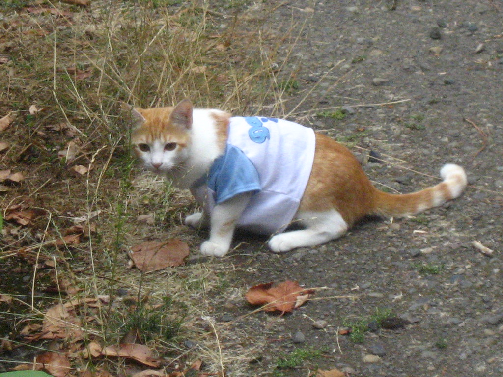 YOUR CAT'S WEARING A T-SHIRT!