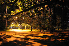Creepy Way... (Diego3336) Tags: park light brazil urban tree nature brasil night way nightshot saopaulo creepy lane ibirapuera vanish