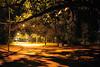 Creepy Way... (Diego3336) Tags: park light brazil urban tree nature brasil night way nightshot saopaulo creepy lane ibirapuera vanish
