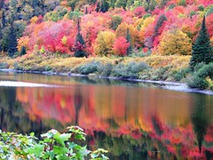 Agawa Canyon, ON (Snuffy) Tags: autumn ontario canada reflection fall seasons fallcolours straightfromcamera agawacanyon neverbeenthere cans2s wowiekazowie ilovemypic naturewatcher excapture artofimages