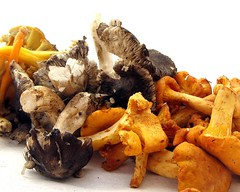 Catalan Mushrooms