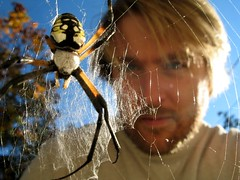 Rob and the six-legged spider - by Rob Ireton