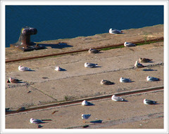 Seagulls resting on the dock (Ins GFM) Tags: world blue seagulls water azul port canon puerto agua bilbao urbannature otoo zb ifc bizkaia gaviotas euskalherria ria canonpowershot iloveit sevenseas riadebilbao flickrpix fotosdearaia mywinners ibarrekofotoclub picswithframes inesg araiane