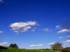 Sky-blue (noahg.) Tags: autumn sky tree green fall clouds landscape walk bluesky karma autumnal october14 specnature theworldthroughmyeyes sanyoc6 twtme noahbulgaria