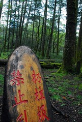 L'arbre mort, Montagne du dragon de jade (stridli) Tags: voyage china wood trip red mountain forest montagne nikon dragon path plateau letters jade promenade shield d200 yunnan arbre wandering panneau lijiang chemin chine bois calligraphie nikond200 nikonstunninggallery