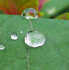 Message in the rain (cattycamehome) Tags: autumn macro reflection green love wet water rain tag3 taggedout leaf lyrics bravo waterdrop tag2 all tag1 sweet bokeh quote © rights beatles waterdrops reserved spinach raindrop refrain catherineingram october2006 exploretop20 aldublin cattycamehome allrightsreserved©