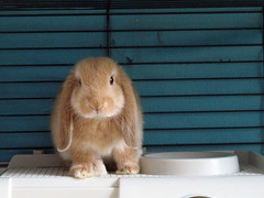 Mornin' (Sjaek) Tags: pet pets cute rabbit bunny sweet konijn adorable fluffy powershot boef a620