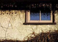 Blue, Blue Window (It'sGreg) Tags: blue window ivy stucco thursdaywalk utatathursdaywalk28 dormantivy flyonthewindow utata:project=tw2006