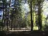 woods2 (Navas) Tags: autumn trees forest germany woods utatathursdaywalk28