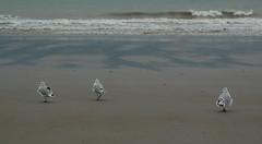 Going my way (harmonia_75) Tags: zee zeemeeuwen