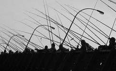 fishing on Galata Bridge (H e r m e s) Tags: fish fishing galata galatabridge