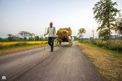 The joy of returning to home after a fulfilling day (Satyajeet Sahu) Tags: village people farmers joy bullockcart paddy wideangle crops chhattisgarh culture india canonphotography canoneos600d