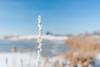 untitled-97.jpg (mortensøe) Tags: sne solskin klartvejr vejr tidpådagen plante vinter ringesø motiv lokalitet årstid dag