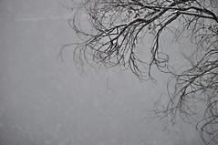 DSC_0635 (malibu8090) Tags: tree branch cold winter white snow flakes fog