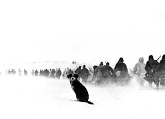 #A dog sits in the snow watching a column of Axis Italian soldiers of the 8th Italian Army, march towards the city during the Battle of Stalingrad. Volgograd Oblast, Russia, Soviet Union. December 1942. [1280 x 928] #history #retro #vintage #dh #HistoryPo (Histolines) Tags: histolines history timeline retro vinatage a dog sits snow watching column axis italian soldiers 8th army march towards city during battle stalingrad volgograd oblast russia soviet union december 1942 1280 x 928 vintage dh historyporn httpifttt2hqtzvh