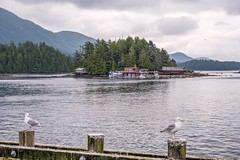 Living next to Noah's Ark, Just in Case... (MIKOFOX ⌘ Thanks 4 Your Faves!) Tags: canada gulls boat xt2 water ocean learnfromexif july houseboat landscape provia island fujifilmxt2 mikofox showyourexif xf18135mmf3556rlmoiswr