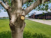Wooden smile (dankeck) Tags: flickrfriday redmaple acerrubrum maple tree smile pareidolia sawed limb branch ohiostate saycheese eye mouth nose jesseowensmemorialstadium columbusohio ohio osu chadwick chadwickarboretum arboretum spring leaves franklincounty centralohio cheeks face