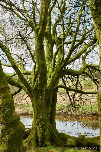 Dancing trees.