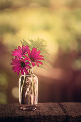 Garden gift (Ro Cafe) Tags: stilllife flowers daisies pink garden outdoors cutflowers bottle bokeh green nikkormicro105f28 nikond600