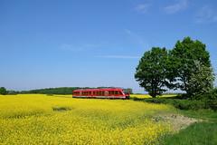 P1560166 (Lumixfan68) Tags: eisenbahn züge triebwagen baureihe 648 dieseltriebwagen alstom coradia lint 41h rapsfelder rapsblüte wahlstorf deutsche bahn db regio