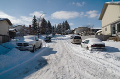 March Snow (Bracus Triticum) Tags: march snow calgary カルガリー アルバータ州 alberta canada カナダ 3月 弥生 さんがつ yayoi newlifemonth 2018 平成30年 spring 三月 sangatsu