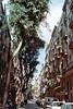 Life Between Buildings: Barcelona Il (CristinaDiaconu23) Tags: analog 35mm flickr minolta film spain españa palmtree walk kodak day buildings barcelona city tree street trees people car
