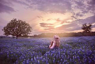 Field of Dreams...