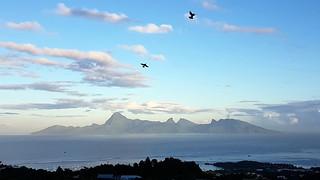 Vol d'oiseaux tôt ce matin du 1er Mai avec en toile de fond l'Ile de Moorea