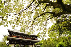 Green after rain (Teruhide Tomori) Tags: landscape forest tree green kyoto japan japon zentemple tofukujitemple leaf spring 緑 新緑 東福寺 東山 京都 日本 禅寺 春 庭園