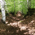 Calabria Verde [AFoR]: Foresta Regionale San Mauro