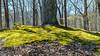Greenleaf Nature Trail (mikerhicks) Tags: cumberlandgapnationalhistoricalpark ewing greenleafnaturetrail hdr hiking nationalpark nature shawanee sonya6500 unitedstates virginia history outdoors geo:lat=36606933333333 camera:make=sony exif:lens=epz18105mmf4goss exif:make=sony exif:isospeed=200 camera:model=ilce6500 exif:focallength=43mm geo:country=unitedstates geo:city=ewing exif:aperture=ƒ95 geo:lon=83633046666667 geo:location=shawanee geo:state=virginia exif:model=ilce6500