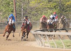 2018 Pimlico Race track (97) (maskirovka77) Tags: pimlico dirt mare race racehorse threeyearold turf yearling
