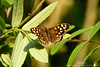 BUTTERFLY (3) (...She) Tags: sheenaduckworthphotography butterfly butterflies wings insect insects nature wildlife spring outdoors bug bugs animal pretty mood atmosphere