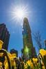 Flatiron Building (trombone65 (PhotoArt Laatzen)) Tags: 1902 manhattan broadway ny nyc newyorkcity newyork bügeleisen flatironbuilding flatiron osterglocken blumen vordergrund sonnenstern blende22