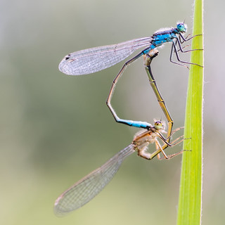 ♥ Damsels in love ♥ | SONY ⍺7III & vintage manual Carl Zeiss Makro-Planar C 60mm ƒ/2.8 T*