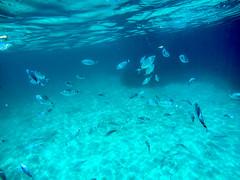 GOPR8579 (urbanlifelens) Tags: mare sea seascape alghero alguer sardegna sardinia underwater fishes pesci seastar stellamarina coast costa sky cielo sun sole