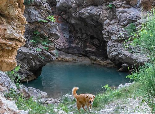 Пещерная собака