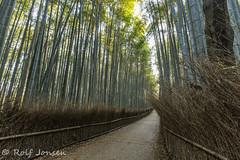 Arashiyama Bamboo Grove (rjonsen) Tags: kyoto treens park forest walkway morning japan green