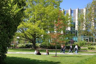 Spring sunshine at Templeman Library, University of Kent, Canterbury campus, Spring 2018