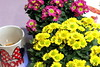 MothersDay-2018 (jclesher21411) Tags: mothers day flowers flower colors color image coffee cup mom mother moms