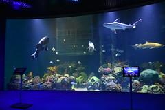 Wonders of Wildlfie National Museum and Aquarium (Adventurer Dustin Holmes) Tags: 2018 wondersofwildlife fish shark aquarium wall aquatic springfieldmo springfieldmissouri greenecounty saltwater sharktank