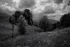 guggisberg (canton of berne) (Toni_V) Tags: m2407941 rangefinder digitalrangefinder messsucher leicam leica mp typ240 type240 28mm elmaritm12828asph hiking wanderung randonnée escursione bw monochrome blackwhite sep2 silverefexpro2 schwarzweiss clouds sky landscape landschaft kantonbern guggisberg alpenpanoramaweg switzerland schweiz suisse svizzera svizra europe ©toniv 2018 180519 cantonofberne