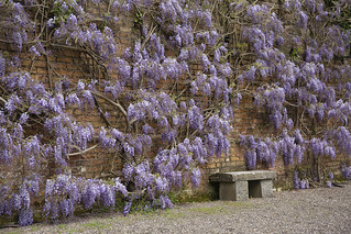 wisteria and seat HBM &HWW