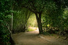 Light Through The Tree Tunnel (Naturali Images) Tags: hope faith trees path light