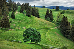 Vosges Mountains (denismartin) Tags: green spring france vosges vosgesmountain lorraine grandest tree flower planois gerbamont menufosse vagney cornimont cloud nature landscape denismartin europe